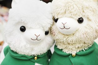 Advancing Alpacasso Corps! Sales Begin in August!