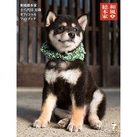 Wafu Sohonke 18 Daime Mamesuke Official Photo Book