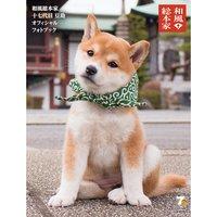Wafu Sohonke 17 Daime Mamesuke Official Photo Book