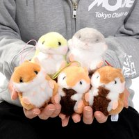 Coroham Coron to Risu-chan Hamster Plush Collection (Mini Strap)