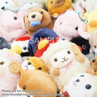 Amuse Plush Bargain Lucky Sets (Standard)