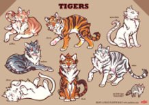 COLOR TIGERS