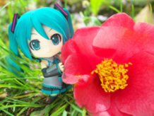 Miku and Camellia