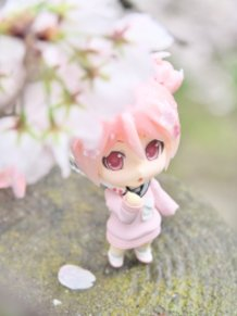 Sakura Miku: Bloomed in Japan