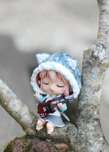 Sonico singing in a tree