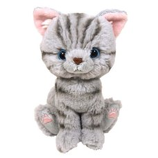 Kitten Plush: American Shorthair