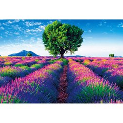 Lavender Blooming Provence Jigsaw Puzzle