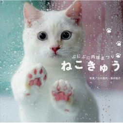 Cat Paw: Puni Puni Cat Paw Festival