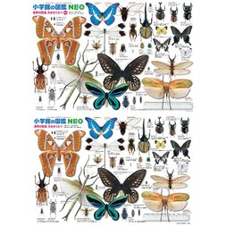 Insects Size Comparison Jigsaw Puzzle