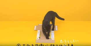 Never Work with Animals: Outtakes from Japanese Delivery Company's Adorable Black Cat Ad【Video】