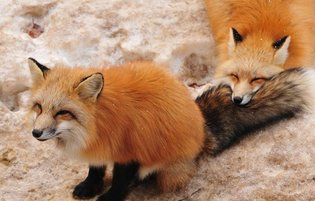 3 Ridiculously Cute Animal Destinations