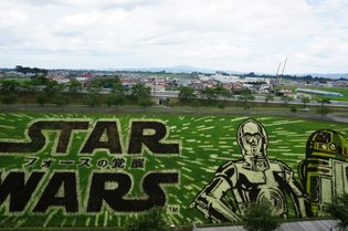 "[Video] This is How ""Star Wars"" Rice Paddy Art is Made! Sentosu Gets in on the Rice-Planting Action Too!"