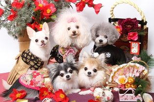 EVENT / Celebrate the New Year with Kimono Dogs!