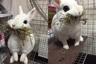 EVENT / Adorably derpy bunny melts even the most frigid hearts on Japanese Twitter 【Pics】