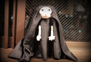 COSPLAY / These Cat Cosplay Will Make Your Day