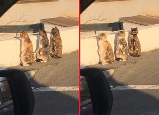 ART / Cats Pretending to Be Humans Get Caught in the Act, Give Adorable Synchronized Reaction