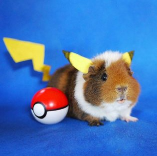 12 Photos of Cute Cosplaying Guinea Pig Sisters will Brighten Your Day