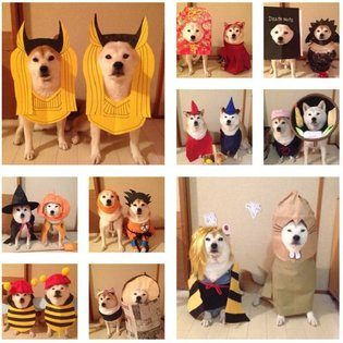 COSPLAY / Cosplaying dog duo are back with even more costumes, cuteness and, instant coordination【Photos】