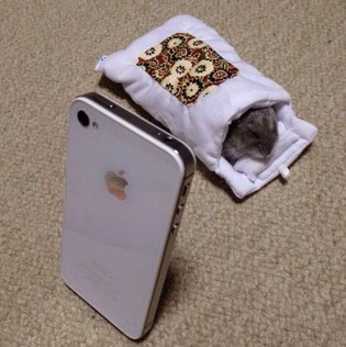 PRODUCT / Hamster Steals iPhone's Mini Futon