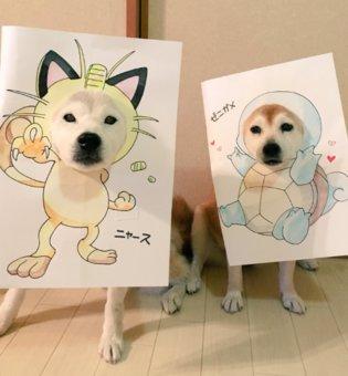 COSPLAY / These Shiba Inu are Cosplay Goals!