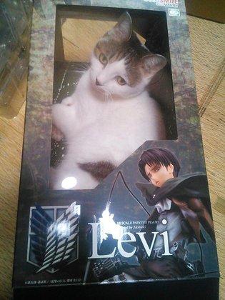 Cat-kind's Weakest Soldier? It's Captain Levi in Cat Form!