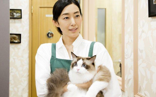 Neko Atsume no Ie Trailer Features Kimura Tae, Taguchi Tomorowo, Okubo Kayoko, and Tons of Cats!