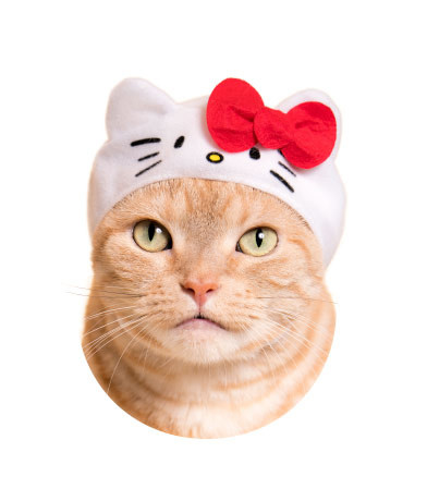 Turn Your Cat Into Hello Kitty With Adorable Collab Headwear!